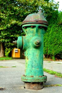 In Seattle, WA the only camouflage you  are likely to see is that of the green fire hydrants. They are hard to spot around here. They are also shaped differently, with funny mushroom tops. They are one of a kind design. Or maybe not. I am making a point to study fire hydrants from here on out.